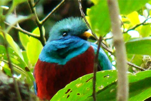 The Resplendent Quetzal, Costa Rica
