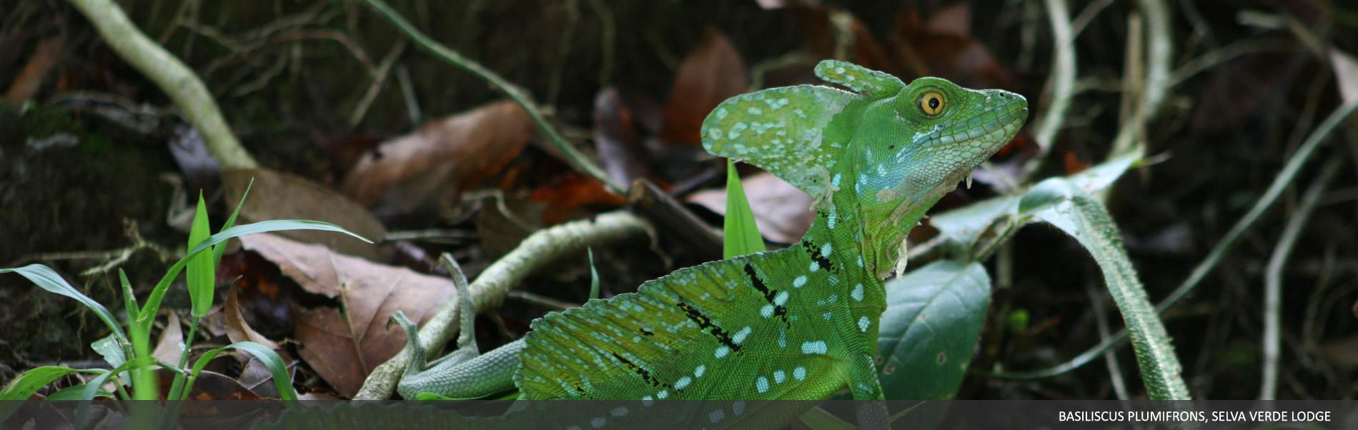 Amphibians-Reptiles-01.jpg