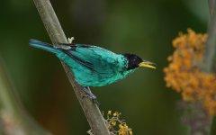 bird_selva_verde_012.jpg