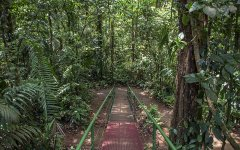 rainforest_selva_verde_003.jpg