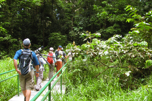 Birding at La Selva by Christa Markley