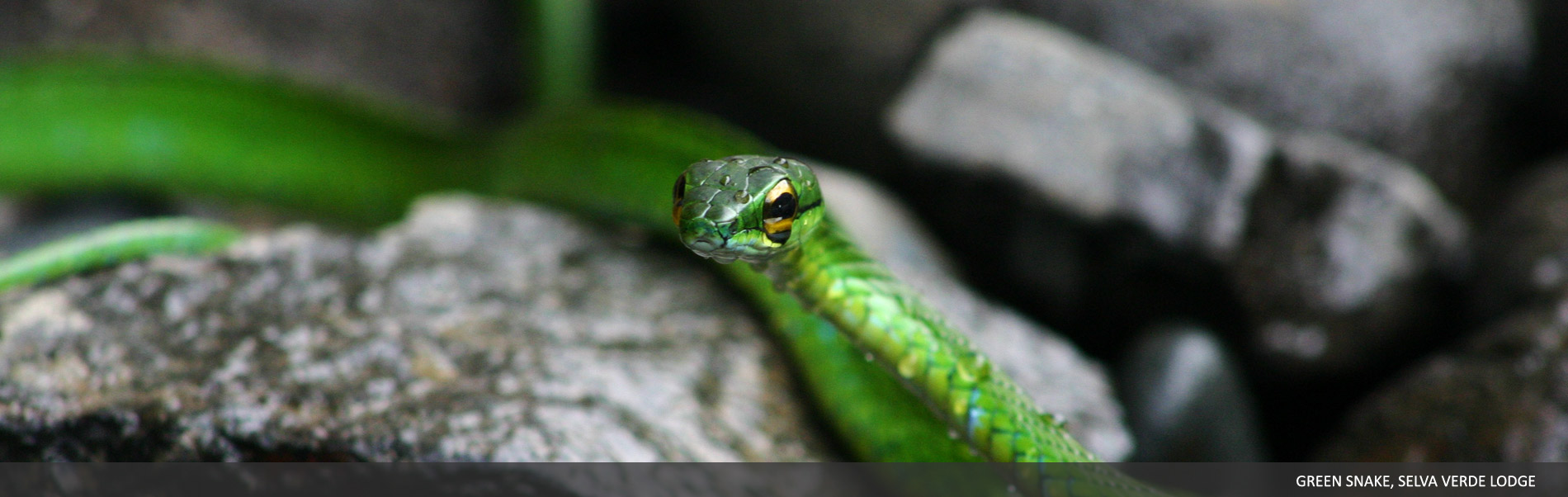 Amphibians-Reptiles-03.jpg