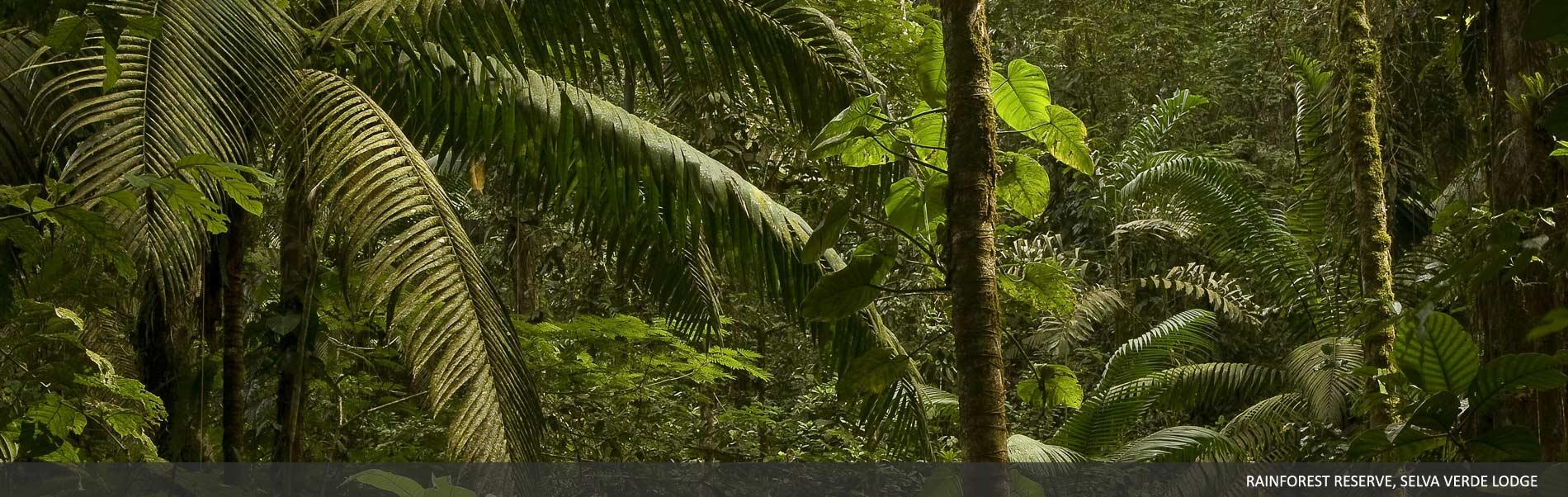 explore-selvaverde-03.jpg
