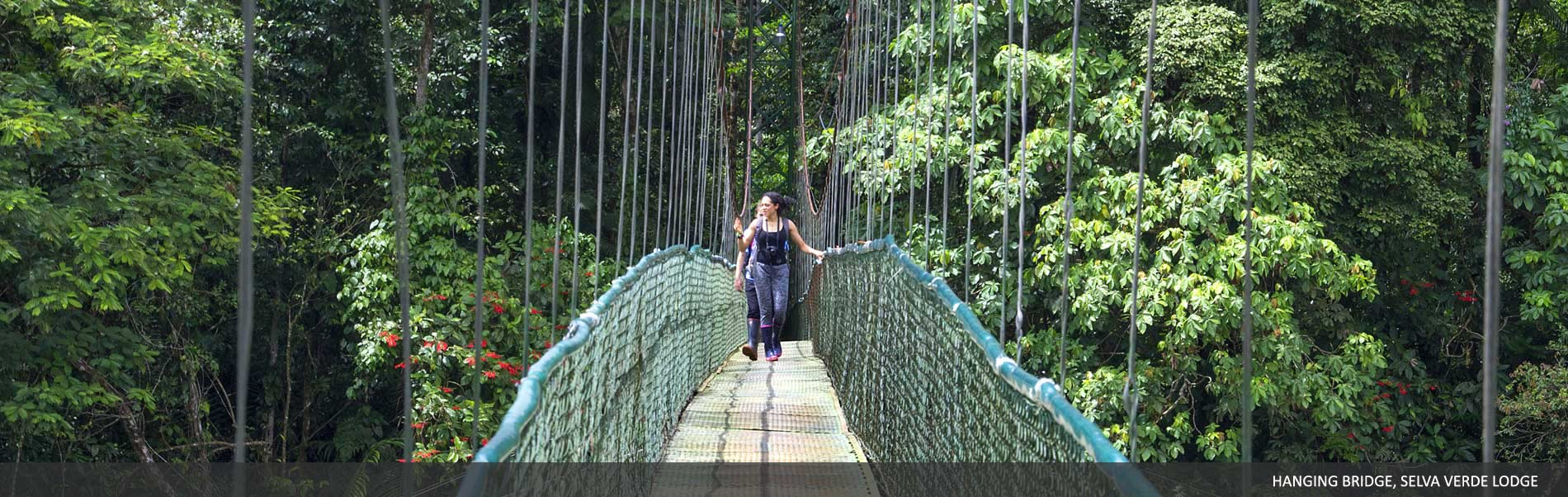 hanging-bridges-sarapiqui.jpg
