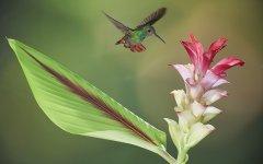 bird_selva_verde_003.jpg