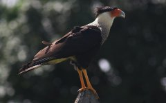 bird_selva_verde_005.jpg