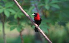 bird_selva_verde_007.jpg
