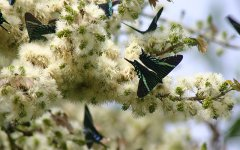 insects_selva_verde_003.jpg