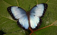 mariposa_selva_verde_001.jpg