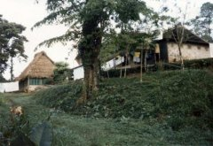 Original guest house and dining room with path to river. c. 1986.jpg